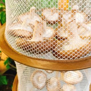 手作りꕤ 干し椎茸✧˖°