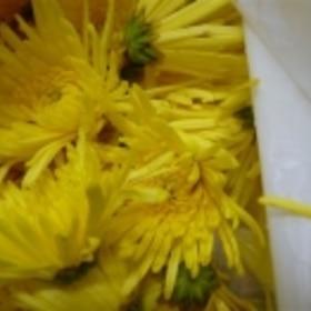 食用菊のゆで方