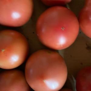 丸ごとトマトの冷凍保存