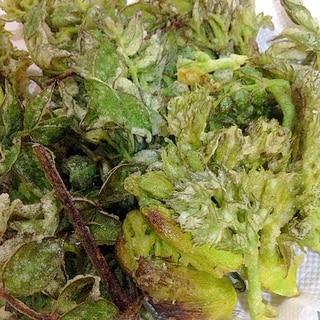 旬でうま♪フライパンで揚げるたらの芽の天ぷら♪