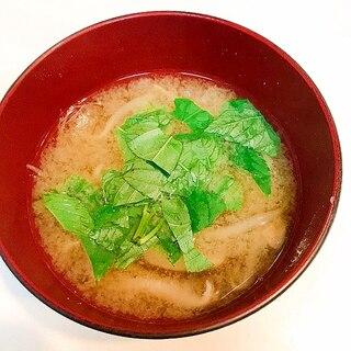 とろとろ仕上げ♪椎茸とモロヘイヤともやしの味噌汁