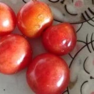 プチぷよトマトのマリネ♡ミニトマト