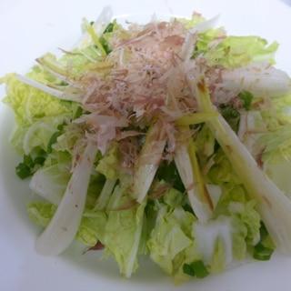 白菜とエシャロットの和風サラダ
