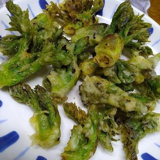 旬のタラの芽の天ぷら