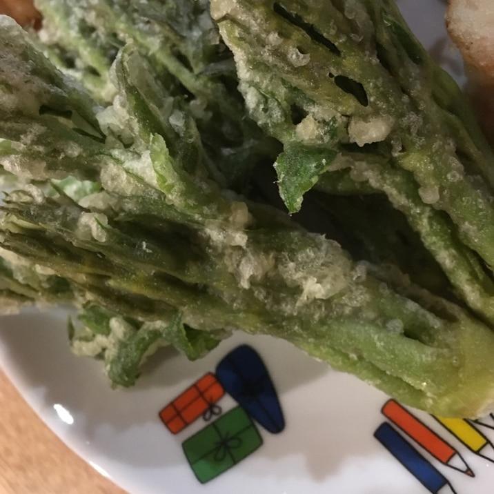 タラの芽とウドの天ぷら