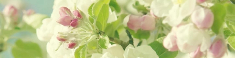 ゴールデンアルジータ