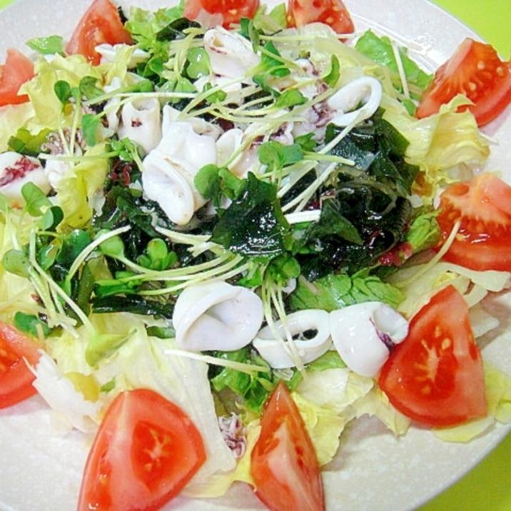 アカイカと海藻レタスのサラダ