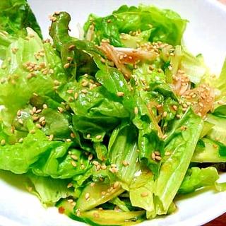 きゅうりとレタスのチョレギ風サラダ