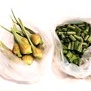 ニンニクの茎と蕾★冷凍保存