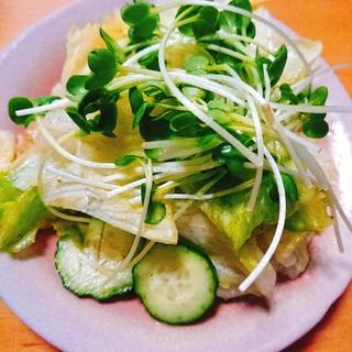 貝割れたっぷりレタスのサラダ