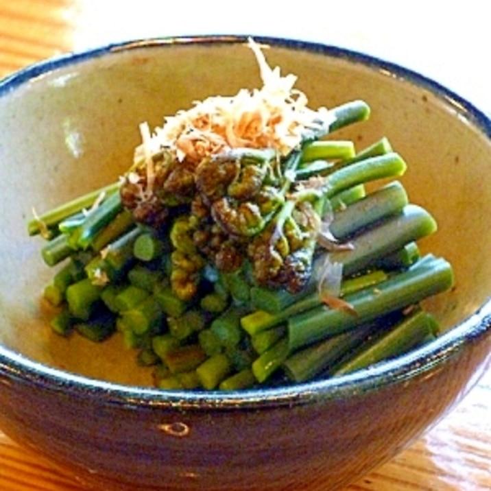 春の山菜わらび